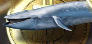 Один из крупнейших биткоин-китов провел транзакцию на $95 млн с комиссией 74 цента